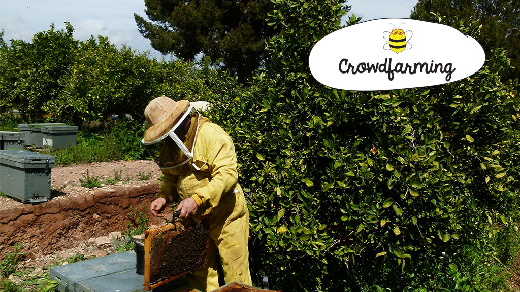 blog der landwirtschaft und imkerei wie wird honig hergestellt. Black Bedroom Furniture Sets. Home Design Ideas