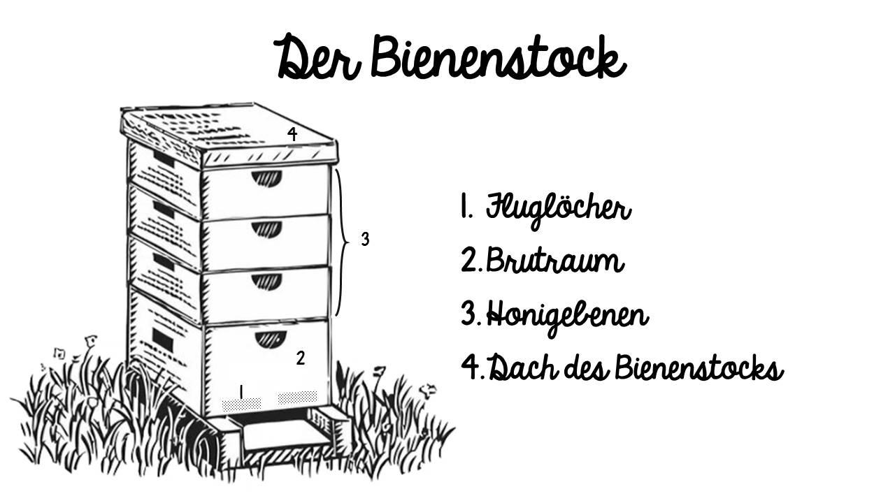 Bienenstock_deutsch