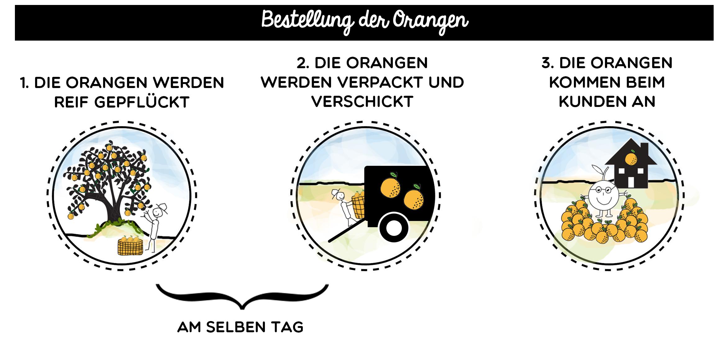 alemán_supply-chain-crowdfarming_orderoforanges