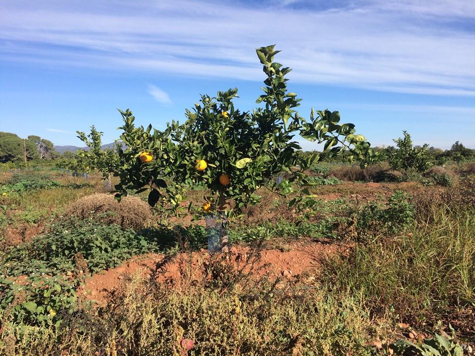 Foto árbol psot DW 31-01-2017