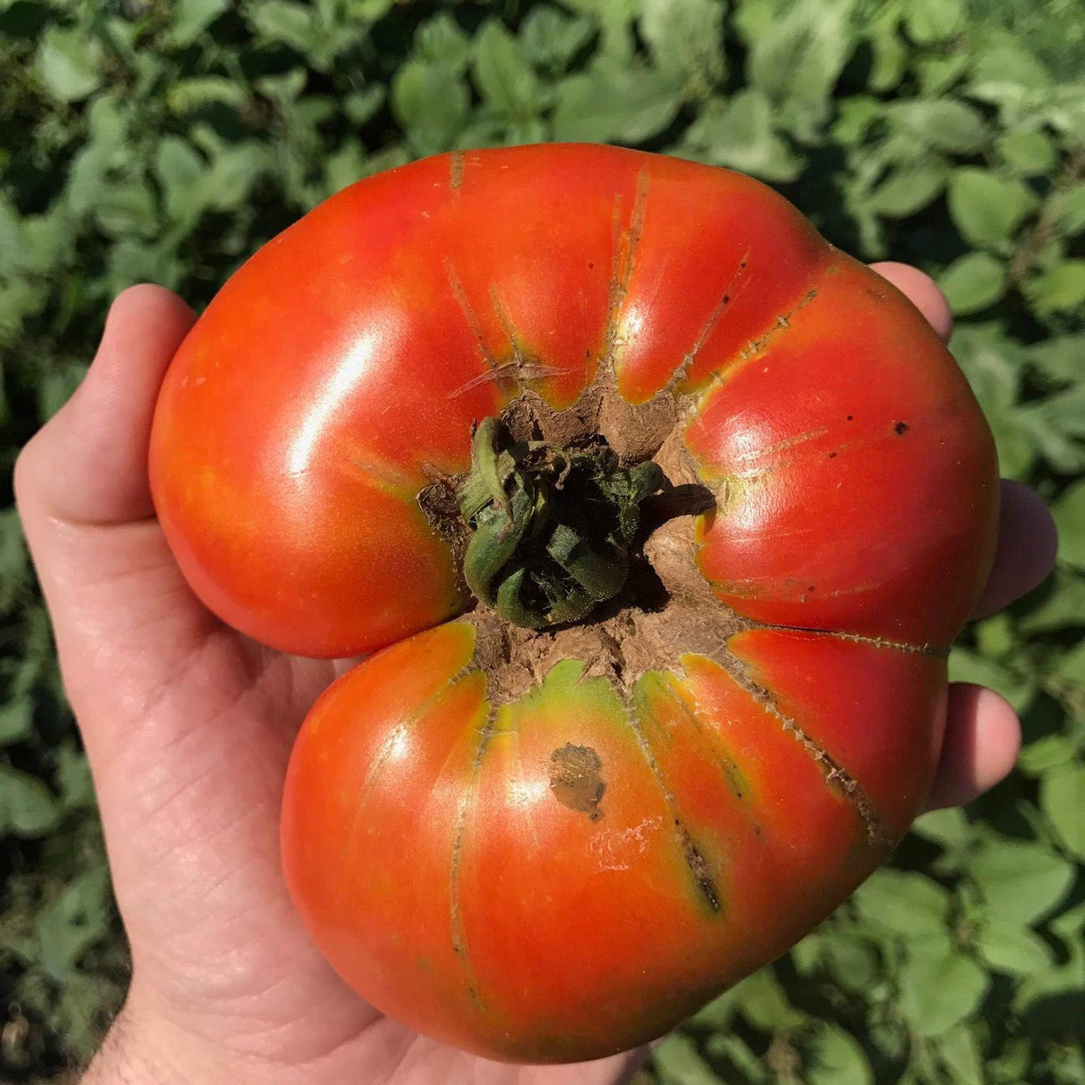 blog der landwirtschaft und imkerei naranjas del carmen kundenerfahrungen die tomaten. Black Bedroom Furniture Sets. Home Design Ideas