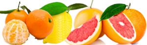 The Naranjas del Carmen Calendar
