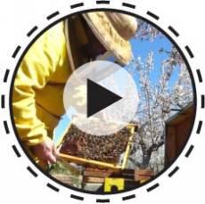 Magst du unseren Honig? Verlieb dich in unsere Bienen...