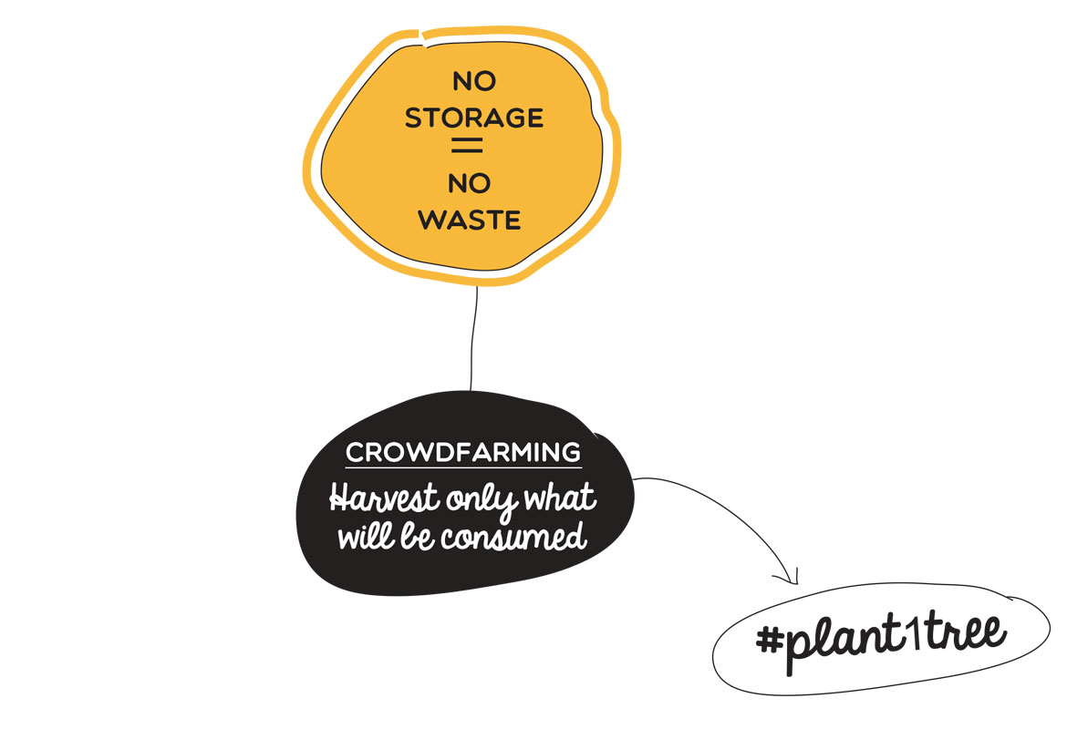 No storage = no waste, Crowdfarming harvest only what will be consumed, #plant1tree