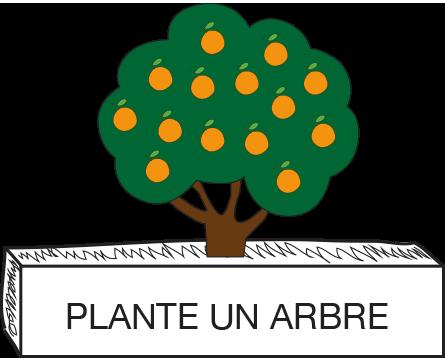 PLANTER UN ORANGER