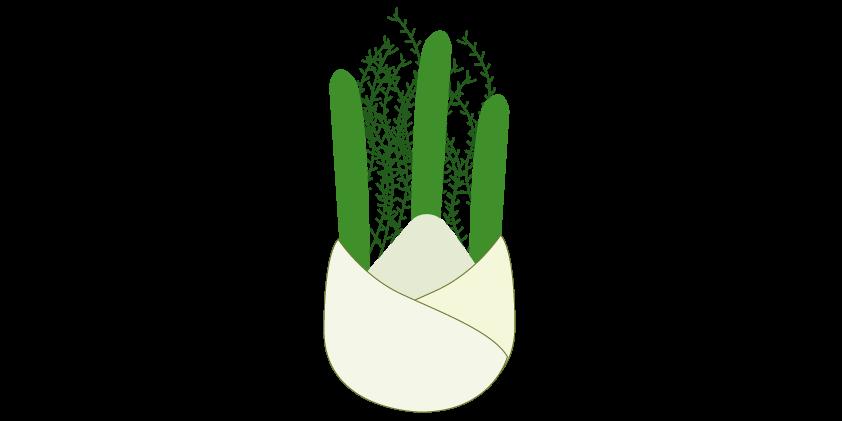 Hinojo<br>(3 unidades, ~1kg)